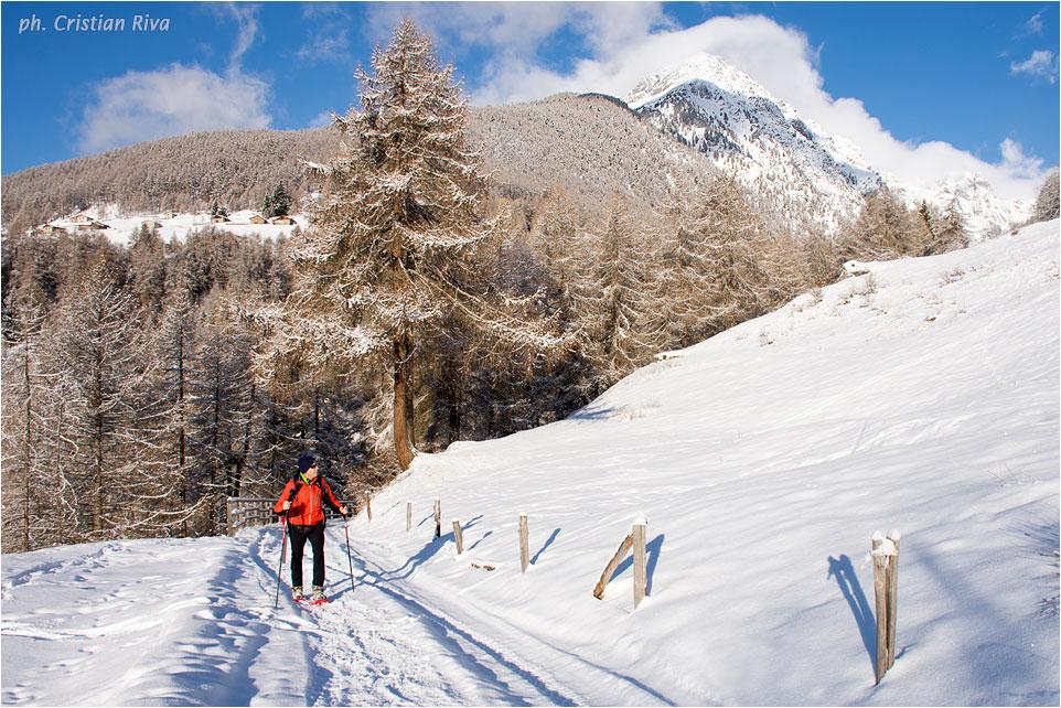 Ciaspolata in Val Canè: salendo verso Cortebona