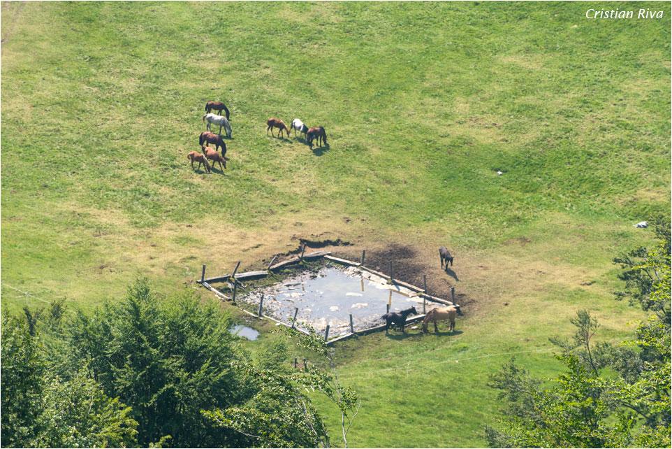 Anello dei pizzi di Parlasco: cavalli al pascolo