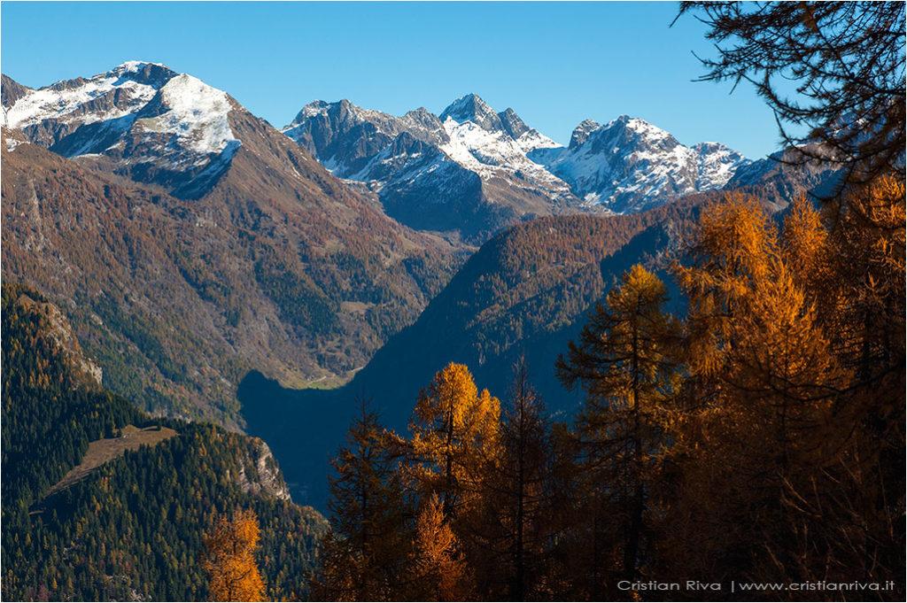 Tra i larici di Monte Colle
