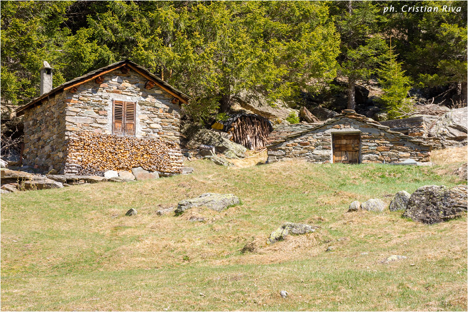 Anello Alpe Oro