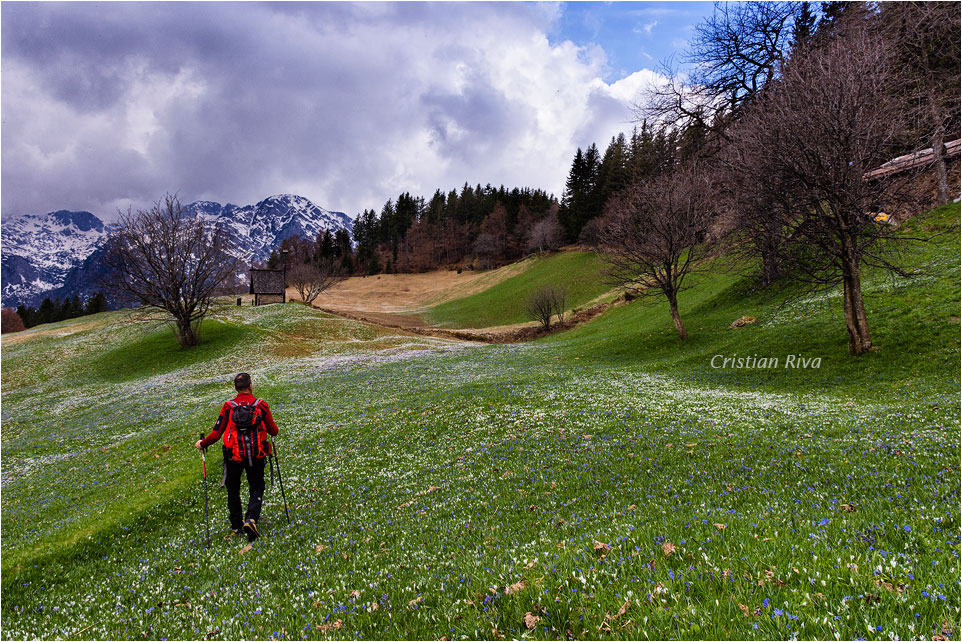 Monte Pigolota: crocus