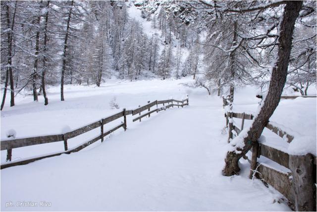 Ciaspolata in Val Canè: neve immacolata