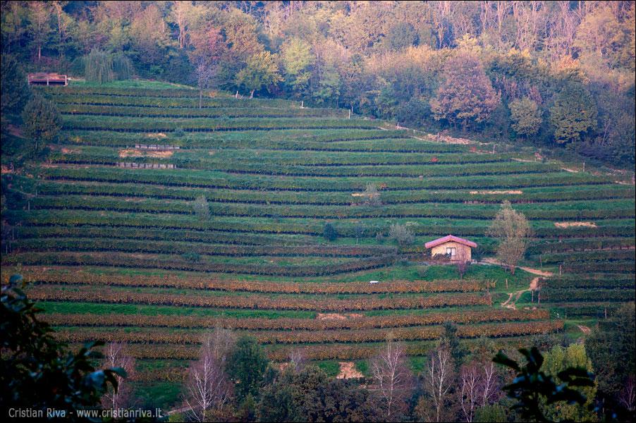 Sentiero Papa Giovanni XXIII: torre San Giovanni: terrazzamenti
