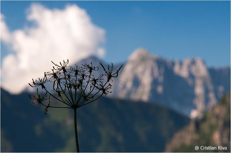 Monte Pradella: sfocature