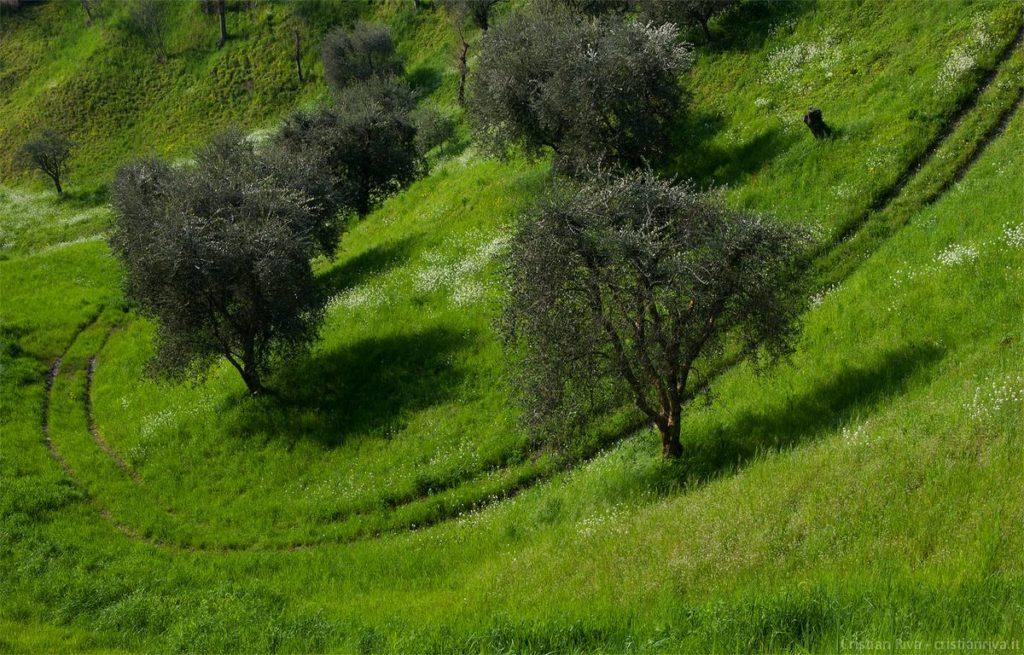 Antica strada Valeriana: percorso tra gli ulivi