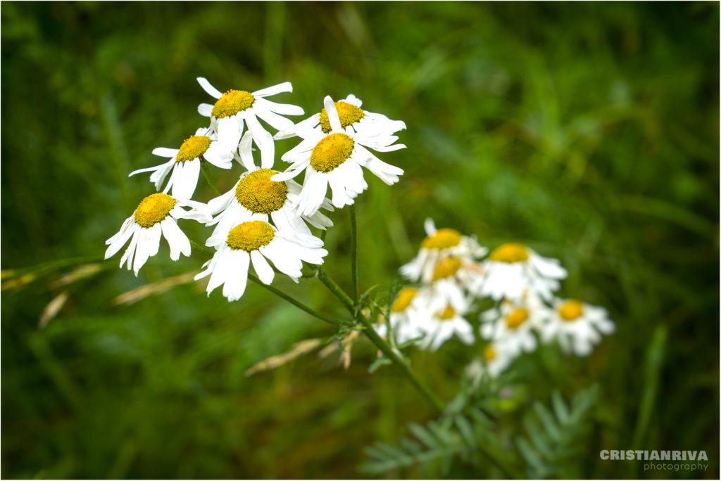 MonteArio: fioriture