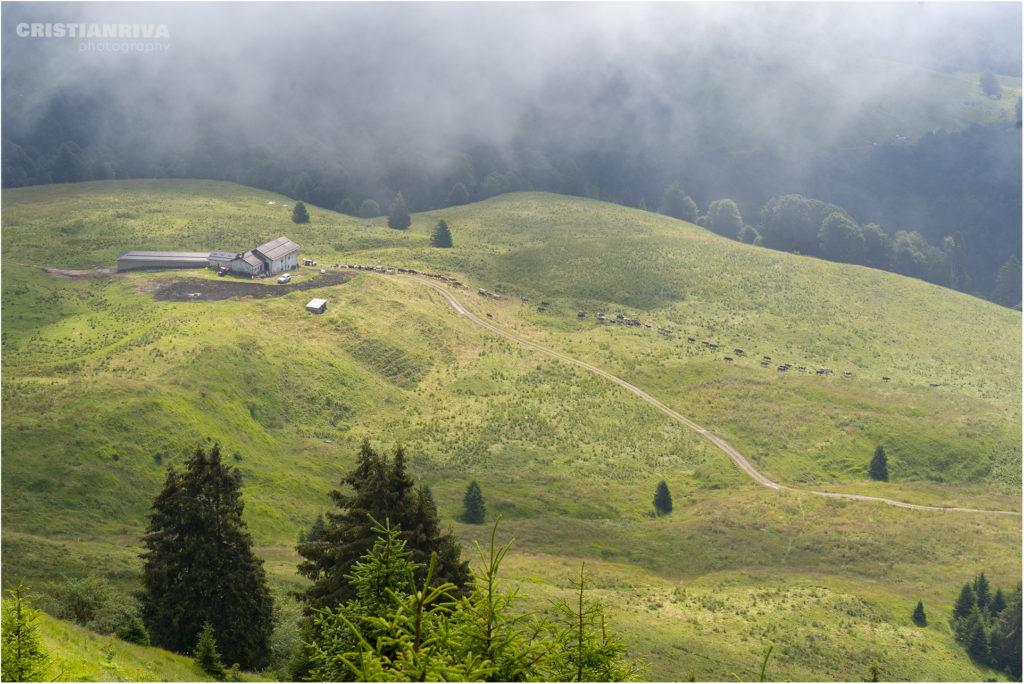 Monte Ario: malga Campo di Nasso