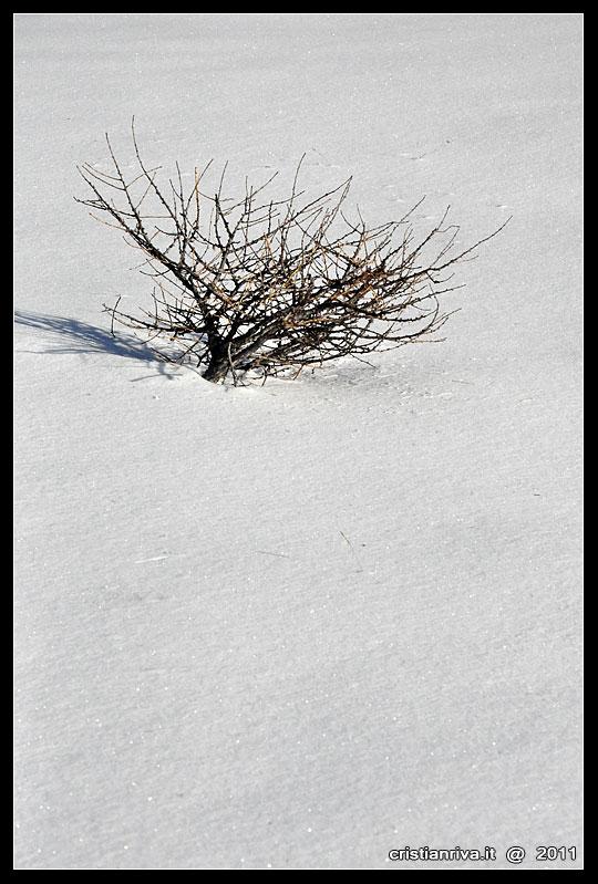 Ciaspolata sul monte Berlinghera